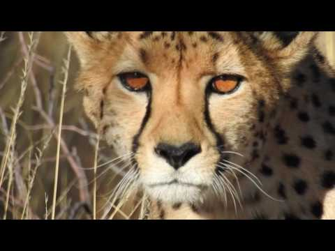 NIKON P900:TESTED IN AFRICA