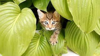 Котята приколы: Мы забрали котенка: Знакомьтесь - наш Беркут!