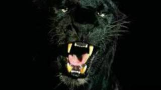 Черная кошка песня