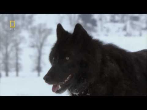 Moonspell - Wolves From The Fog