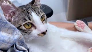 【貓日常】這就是養兩隻貓的感覺 / 貓變成藥罐子了 :( | 謝秉鈞Attila |