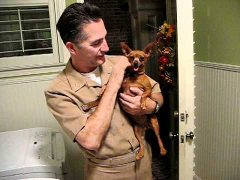 Dogs happy to see daddy come home!