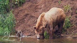 not-so-wild-alaska-day-3-bears-salmon-in-the-kenai-river-system