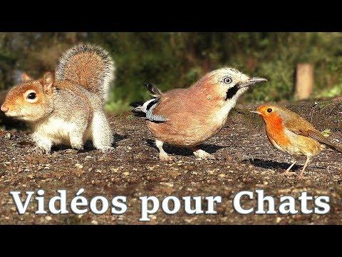 Vidéos Pour Les Chats à Surveiller : Petits Oiseaux Partout
