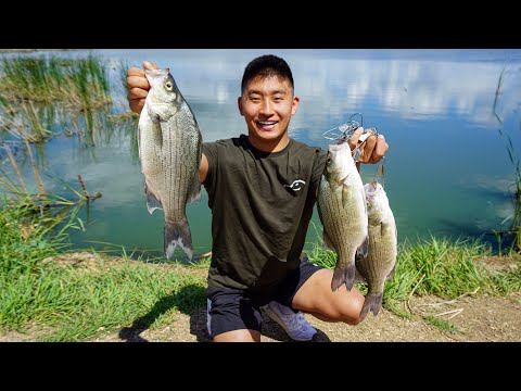 Shore Fishing For GIANT White Bass! (CATCH CLEAN COOK)
