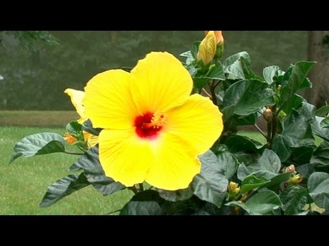 Top Tropical Garden Plants