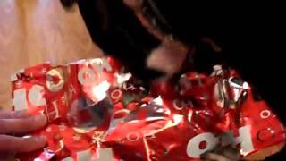 Staffordshire Bull Terrier Christmas