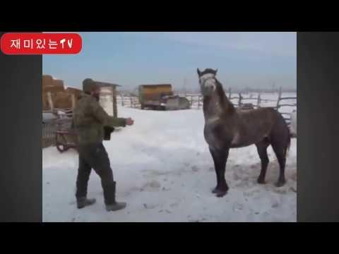 chevaux drôles - un drôle vidéos de cheval. Compilation