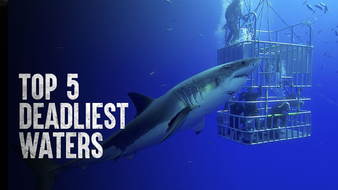 The Most Dangerous Places to Swim in the World