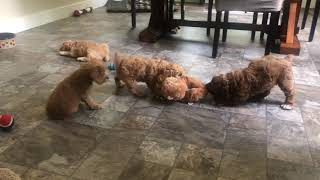 A little game of tug