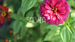 SALVIA ein barrierefreier Bildungsgarten