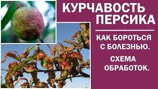 Обработка плодовых деревьев весной.Обработка персика