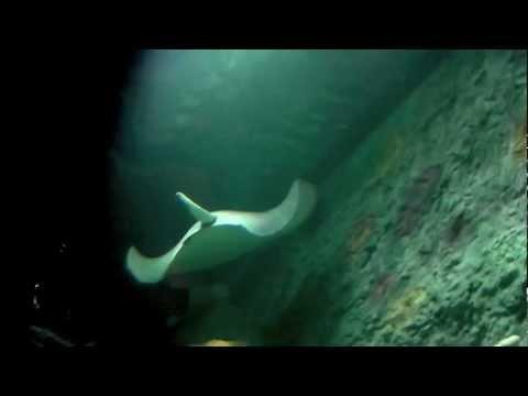 sea life kansas city aquarium grand opening youtube. Black Bedroom Furniture Sets. Home Design Ideas