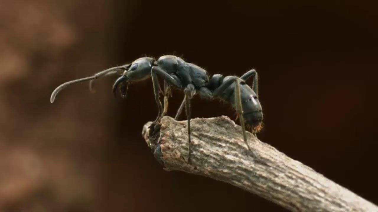 Belgesel | Karıncaların Dünyasına Yolculuk  HD