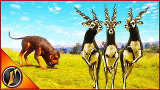 Blackbuck Hunt! | Taking a Look at Blackbuck TruRACS!
