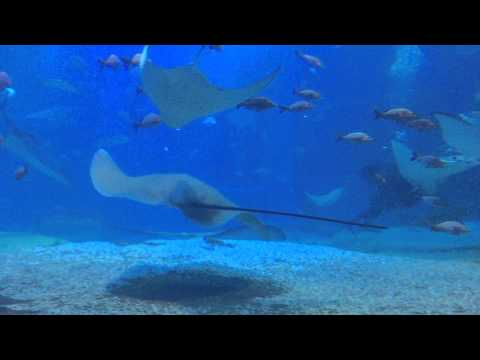 03 septembre 2015 - Osaka - Aquarium Kaiyukan - L