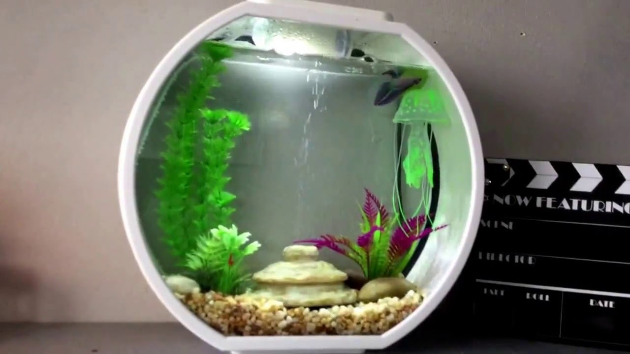 new betta in aa deco o mini aquarium 2 6 gallons youtube. Black Bedroom Furniture Sets. Home Design Ideas