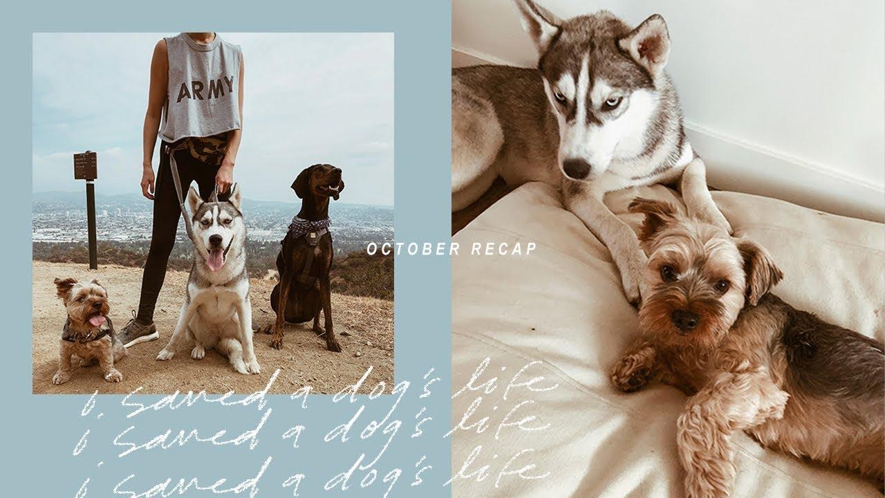 I Saved A Dog's Life | October Recap