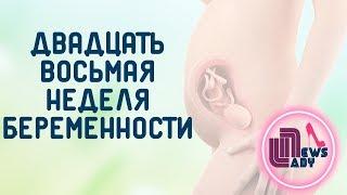 видео 28 Неделя беременности