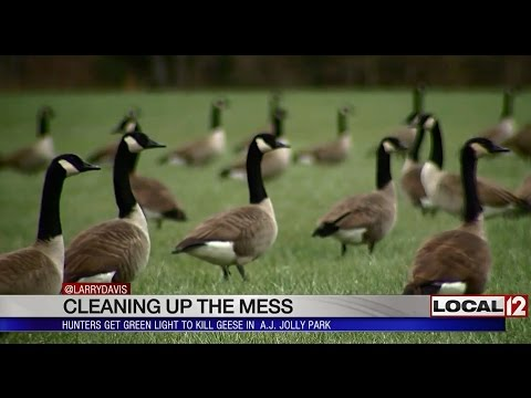 Cleaning Up The Mess: Hunters Get Green Light To Kill Geese In Local Park
