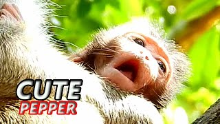 CUTEST BABY PEPPER...!! LOOK SO LOVELY FALL IN LOVE YOU || DREAM ME IN YOUR HEART...