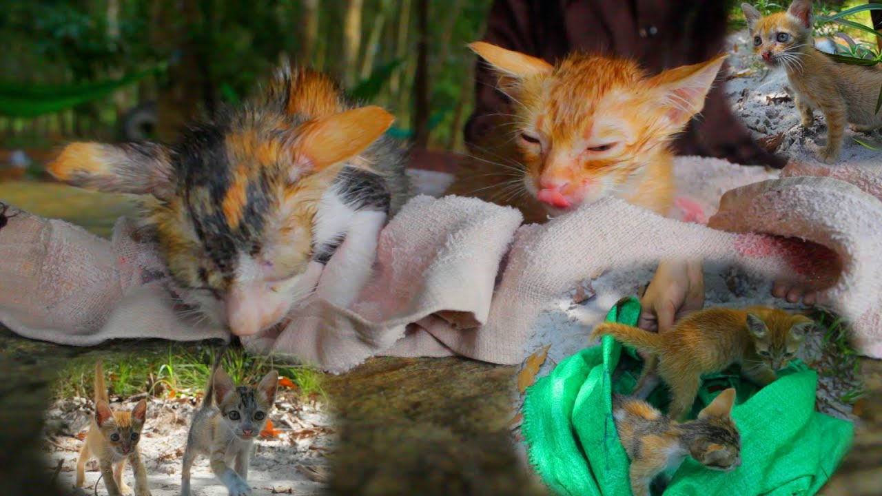 Kitty have lost their mothers and are currently starving - Rescue two abandoned kittens