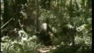 fierce vietnam combat footage