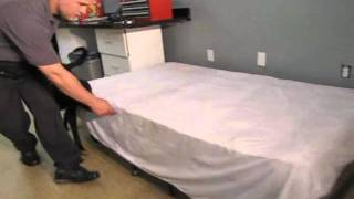 Bed Bug Dog Detection Training Center, Serving Nj, Nyc, Philly