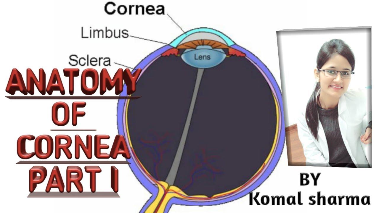 Anatomy of cornea part 1 || Cornea anatomy || Cornea ...