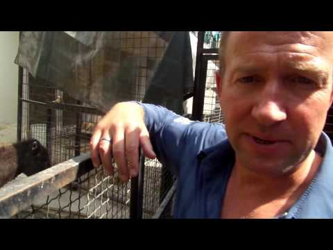From Nowzad in Afghanistan to Animal Aid Abroad in Australia