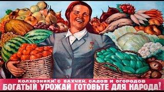 Суцільна колективізація в СРСР (укр.) ЗНО з історії України.