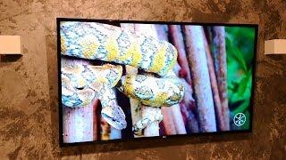 ОБЗОР ТЕЛЕВИЗОРА LG 55UK6450PLC smart tv, искусственный интеллект WebOS 4.0 | HDR 4K