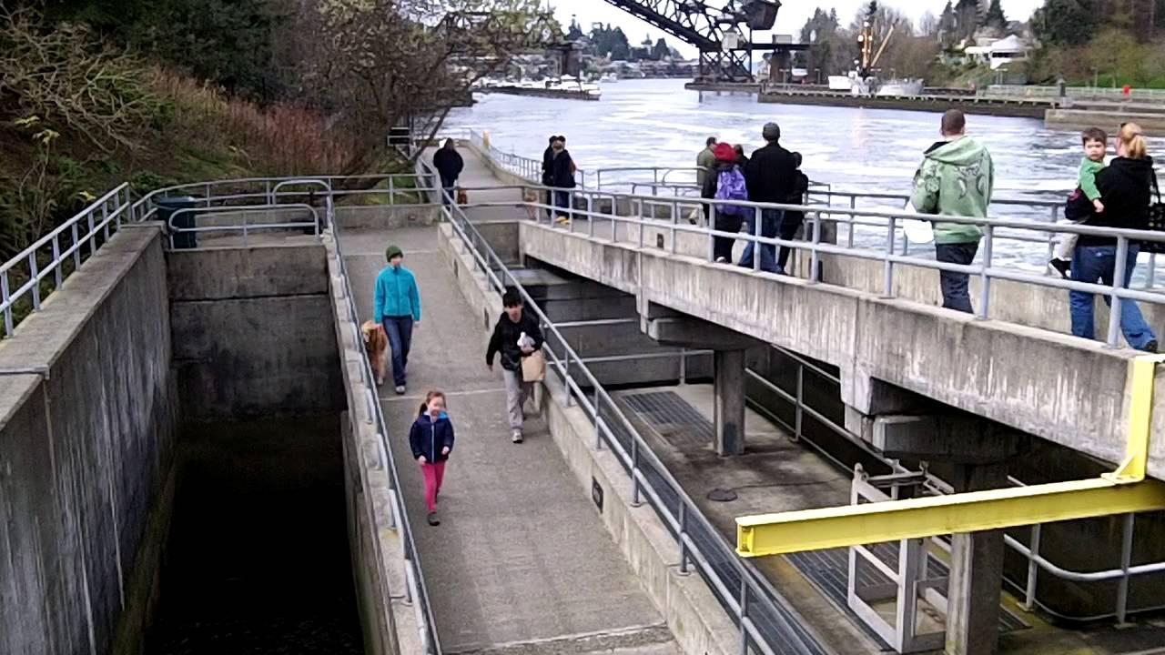 Salmon Ladders in Seattle WA