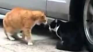 Разговор котов мяу мяу