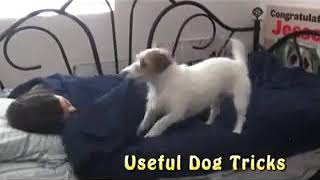 Nik Tod || How dog good for home ||