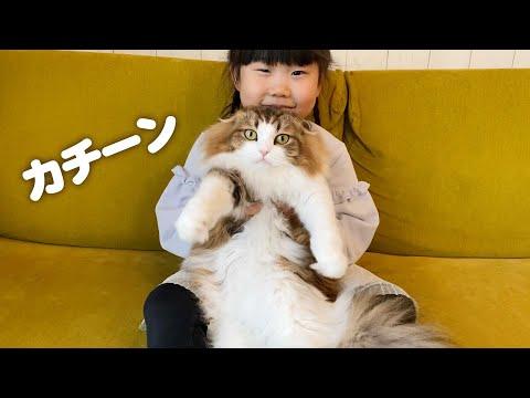 娘の前だけぬいぐるみ化する猫