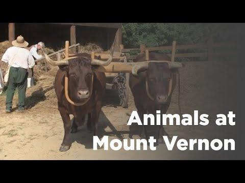 The Animals of Mount Vernon