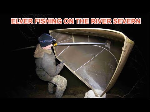Beneath the Waterline: River Severn Eels (Part 1 of 5)
