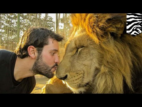 Wildlife selfies: Instagram and Facebook wildlife selfies promote animal cruelty - TomoNews