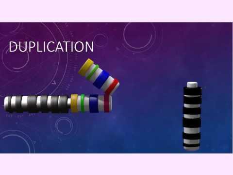 Poliklinika Harni - Kromosomske anomalije
