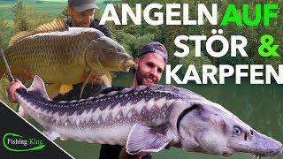 Die 7 BESTEN Tipps für erfolgreiches STÖR- & KARPFEN-ANGELN am FORELLENSEE | Fishing-King.de
