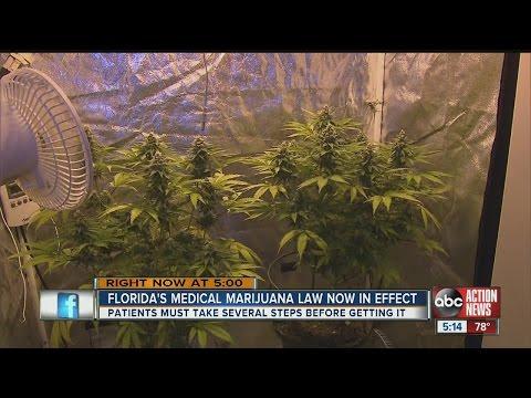 Florida's medical marijuana law now in effect