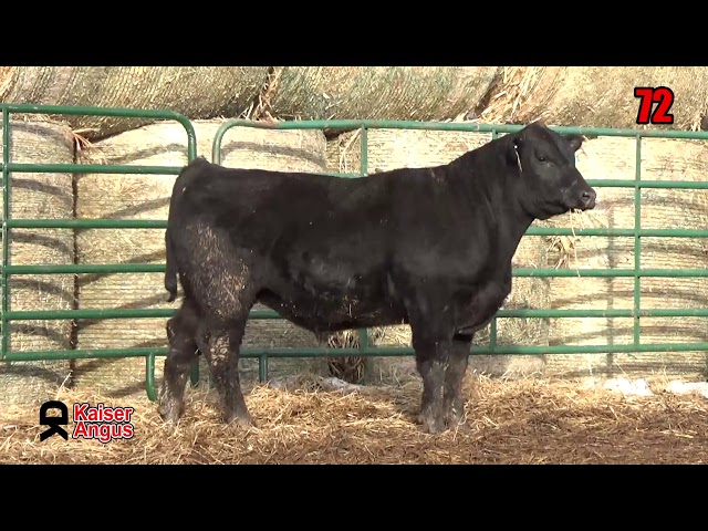 Kaiser Angus Ranch Lot 72