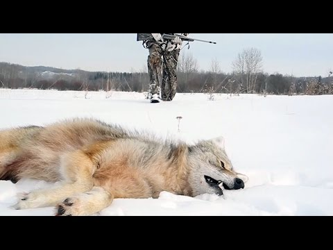 Coyote Hunting Tip: Use A Wind String