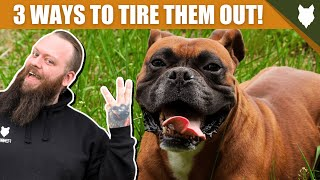 3 Tips To Tire Out Your BOXER Puppy