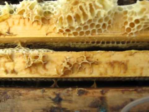 Чем полезен мед для человека? - YouTube