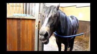 Смешные лошади.