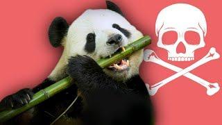 El bamboo lentamente m4ta a los pandas