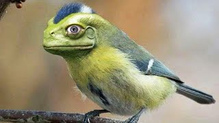 Top 10 Bird Species of All Time