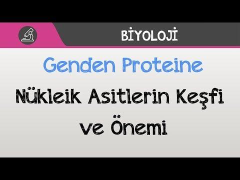 Genden Proteine - Nükleik Asitlerin Keşfi ve Önemi